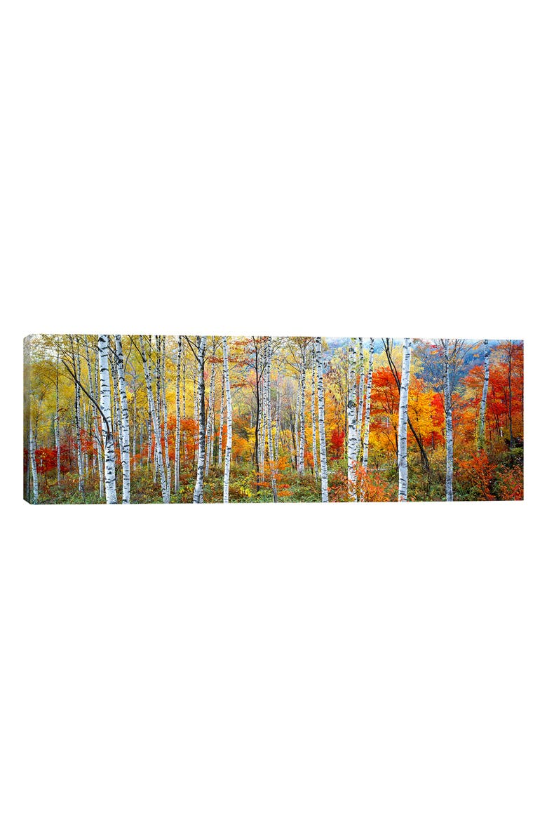 ICANVAS Fall Trees Giclée Print Canvas Art, Main, color, YELLOW