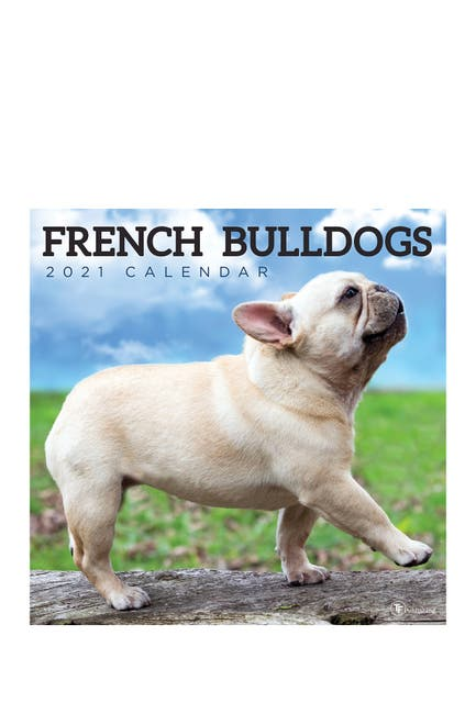 Image of TF Publishing 2021 French Bulldogs Wall Calendar