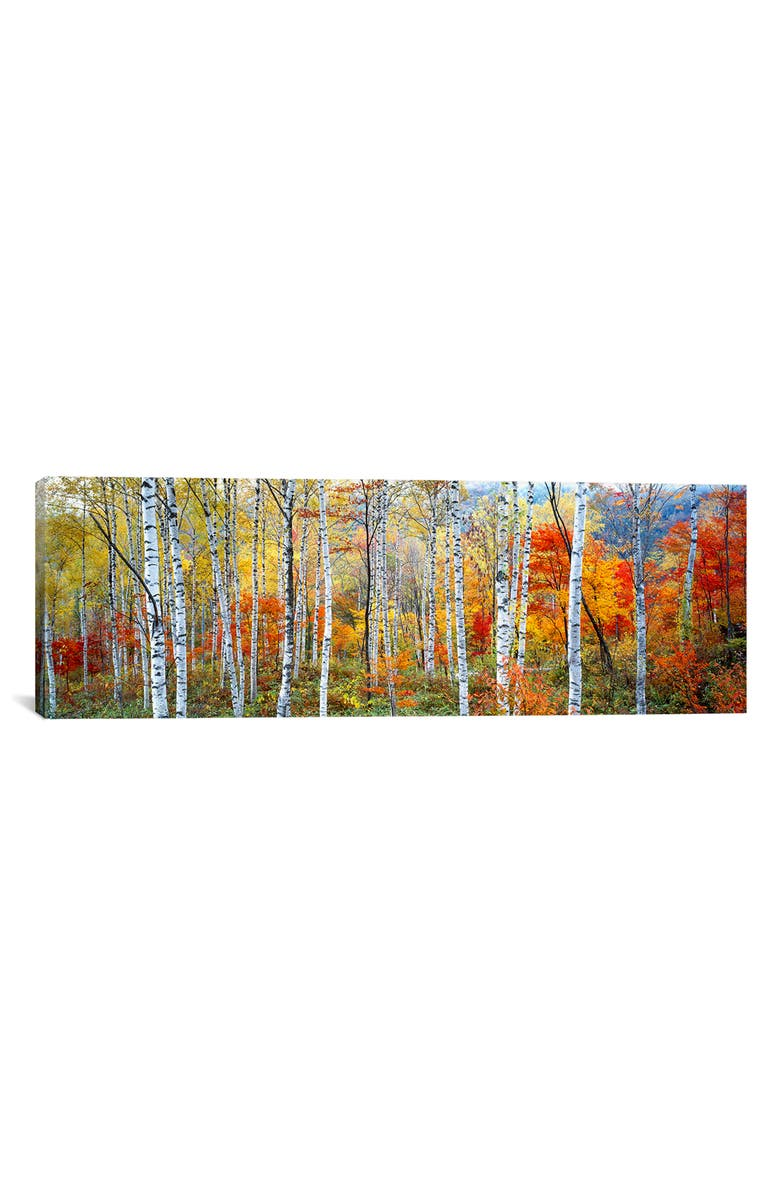 ICANVAS Fall Trees, Shinhodaka, Gifu, Japan Giclée Print Canvas Art, Main, color, YELLOW