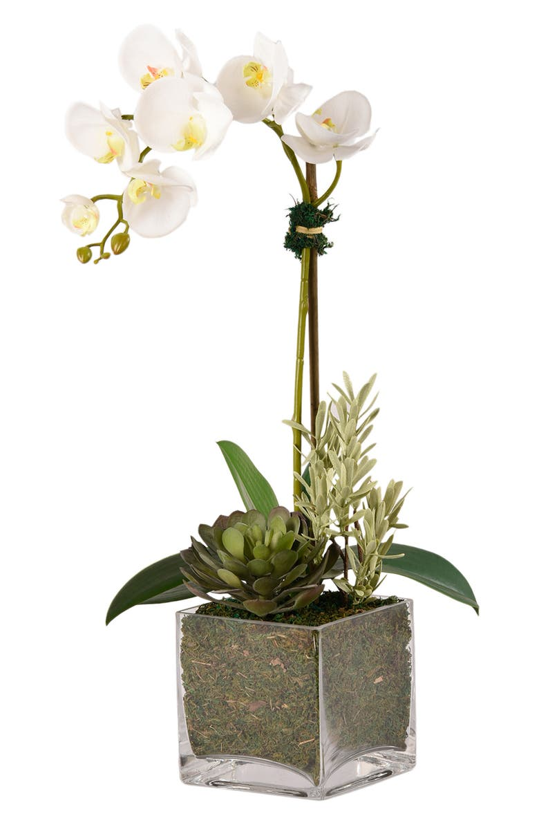 BLOOMR Orchid & Succulent Planter Decoration, Main, color, BROWN SMALL