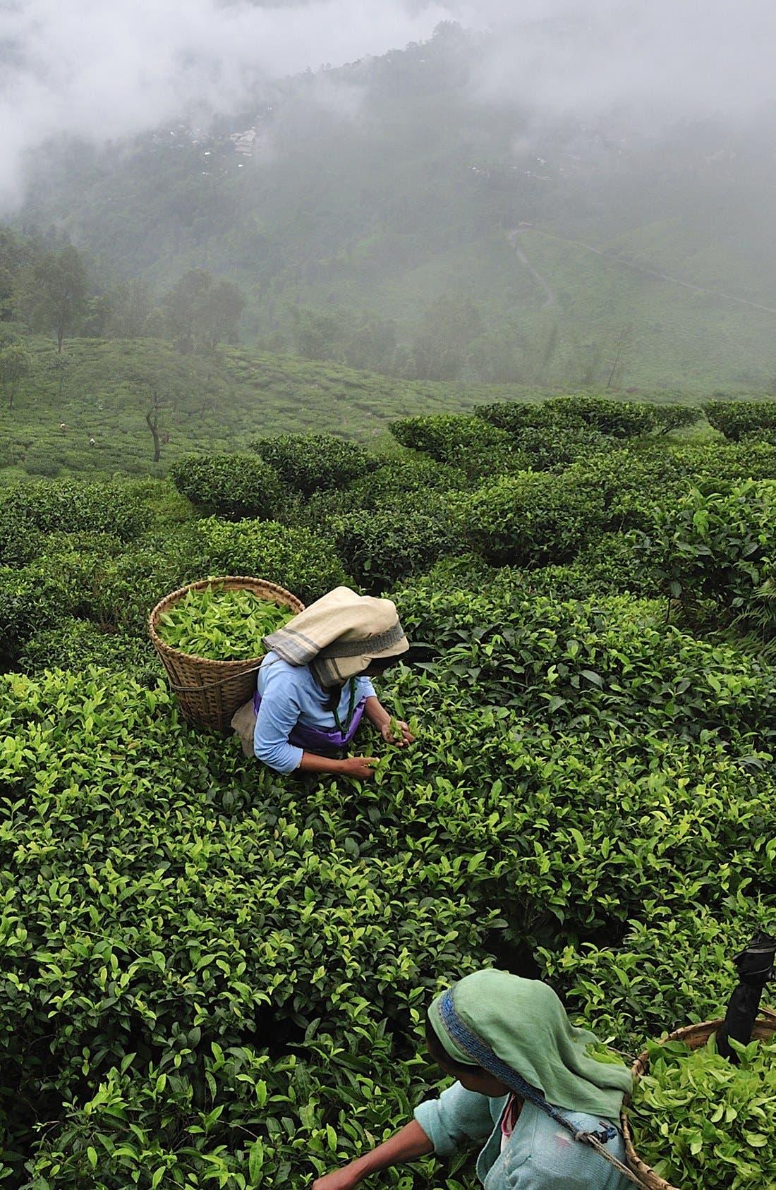 ,                             Darjeeling Tea Cologne,                             Alternate thumbnail 3, color,                             000