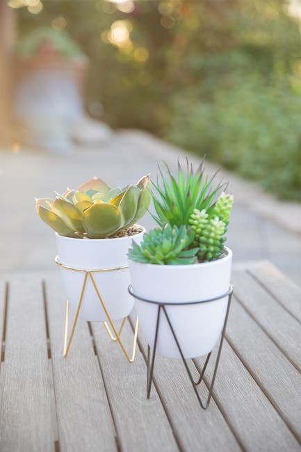 "Image of FLORA BUNDA Succulent in 4.75"" White Pot in Gold Metal Stand"