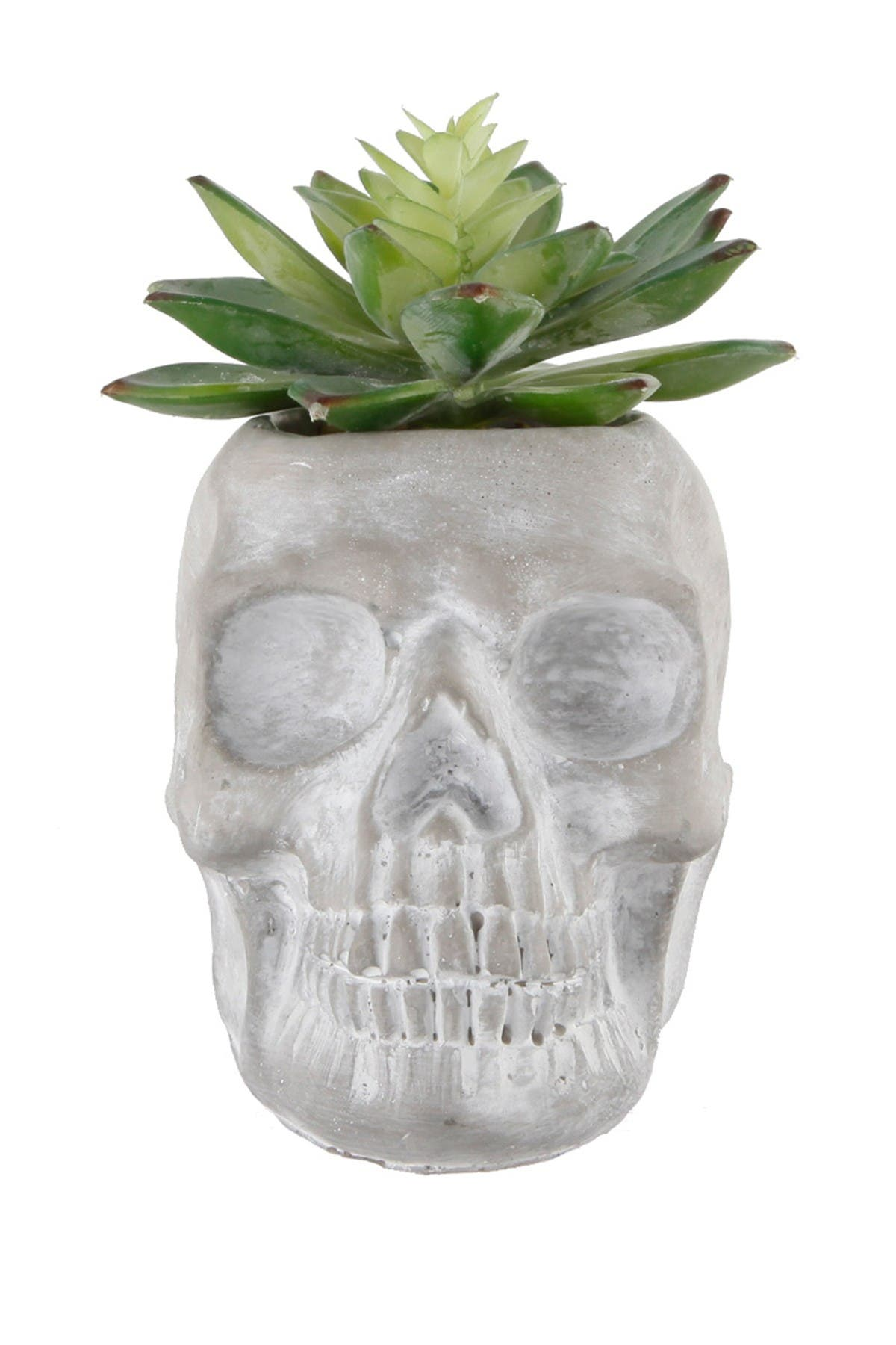 "Image of FLORA BUNDA 5"" X 3.2"" Succulent in Cement Sugar Skull"