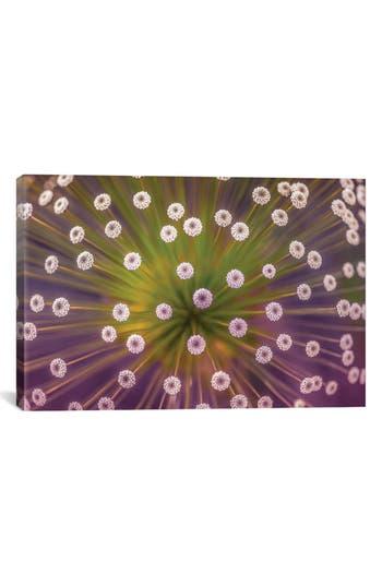 Icanvas 'Colors' Giclee Print Canvas Art, Size 26x40 - Purple