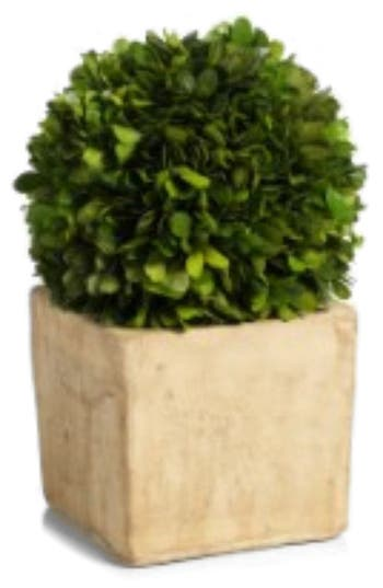 Zodax Carina Topiary Decoration, Size One Size - Green